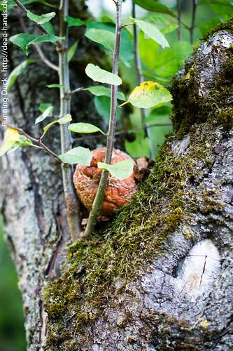 Herbstapfel