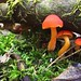 Red Mushrooms by I am Jacques Strappe