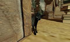 black cat around the corner