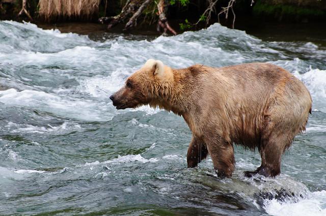 [Katmai National Park, Alaska]
