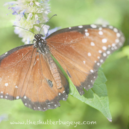 Butterfly 7 by The Shutterbug Eye™