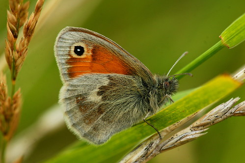 DSC08597 - Small Heath