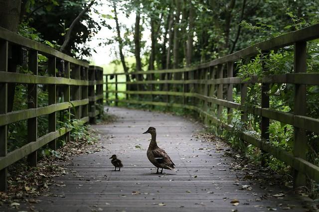 Greenwich Ecology Park
