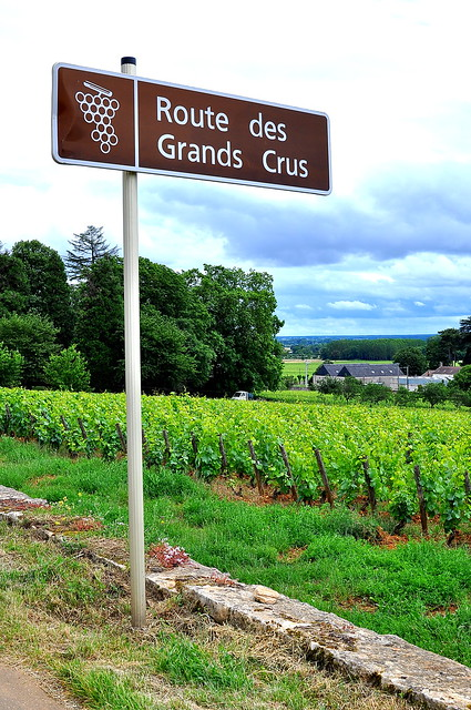Route des Grands Crus - Burgundy
