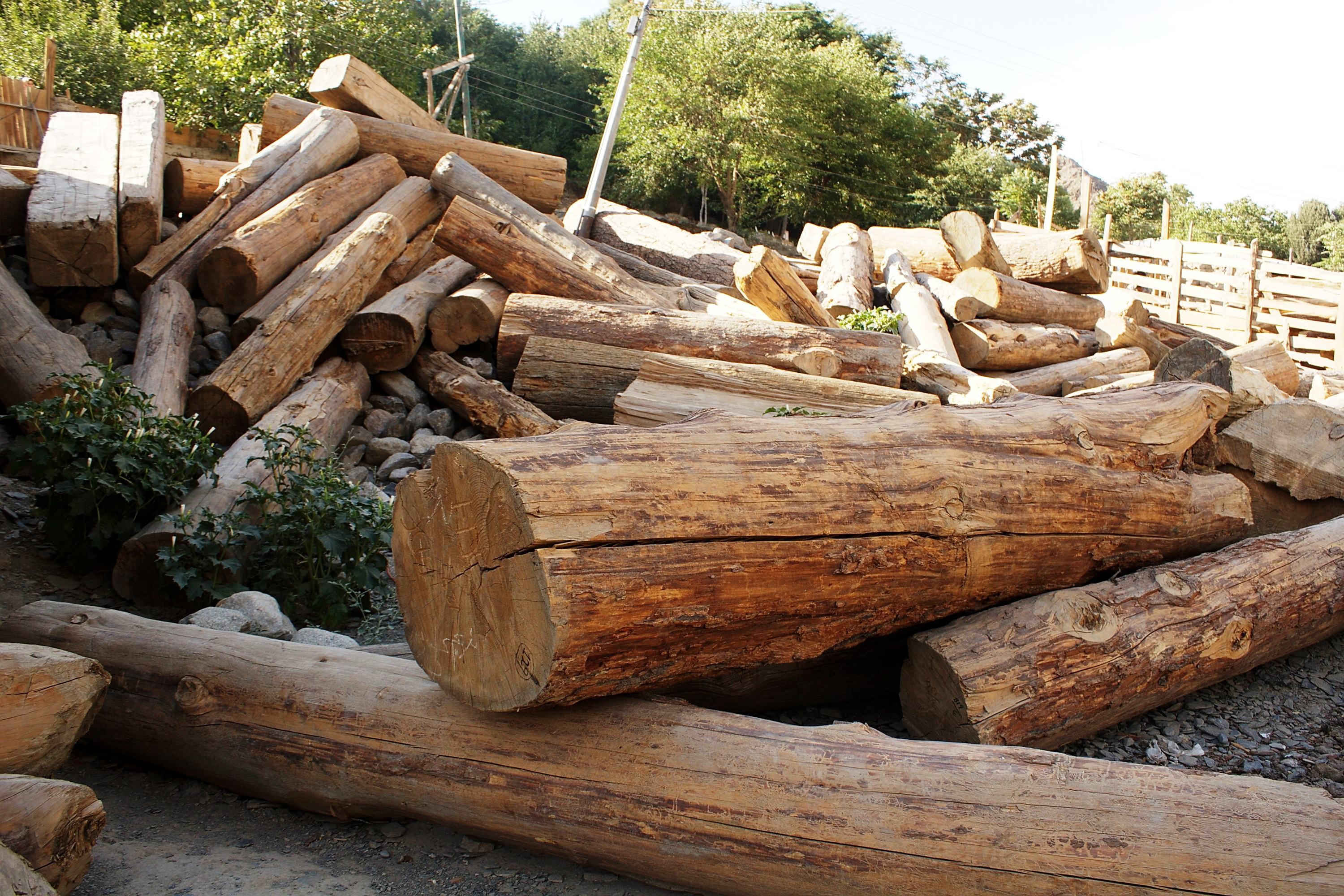 U s investigation into illegal timber imports a sea for Pine tree timber