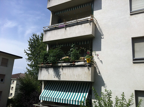 Balcony, mid-August