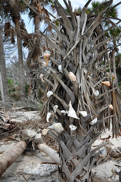 tree with shells