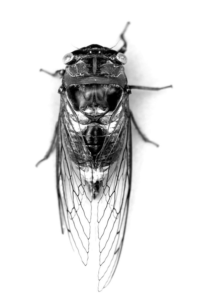 Cicada Aerial View