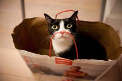 [フリー画像素材] 動物 1, 猫・ネコ ID:201209051000