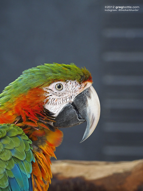 Friendly Parrot at Wingham Wildlife Park