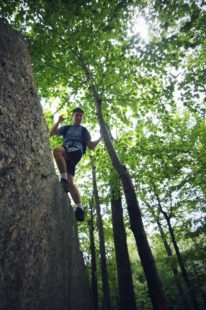 genius climbs a tree