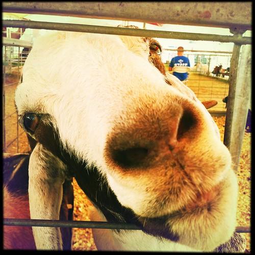 Goatface Killah, Delta Fair, Memphis, Tenn.