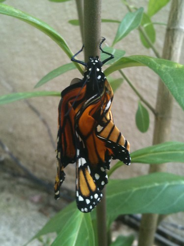20120908 07 mariposa