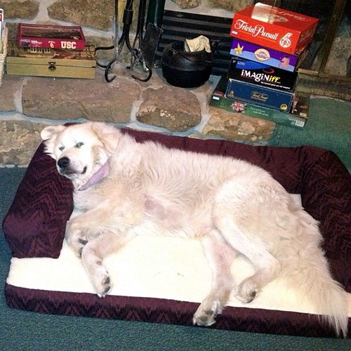 Shiloh's new bed