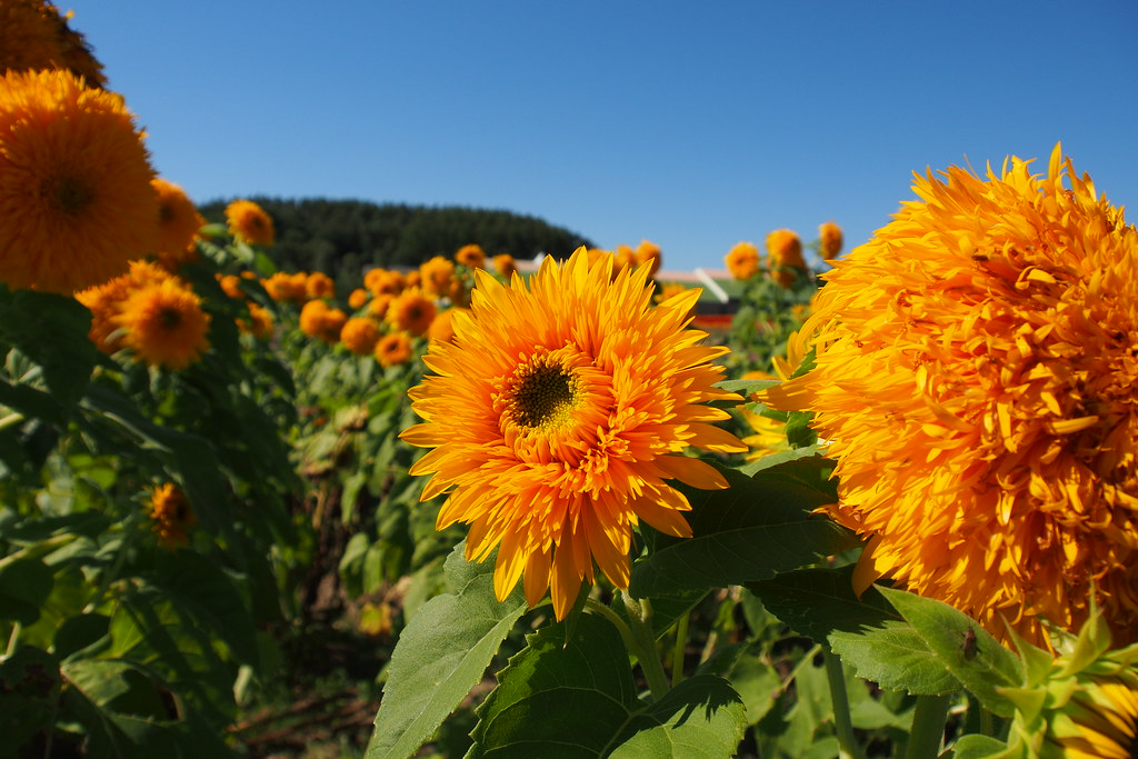 北海道 Flower Land