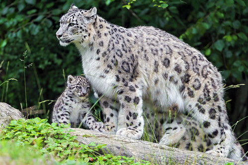 Mohan and his mother