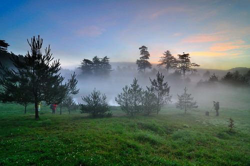 Foggy Morning at Fushoushan Farm  @福壽山農場