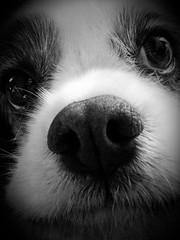 [フリー画像素材] 動物 1, 犬・イヌ, 子犬・小犬, モノクロ ID:201209251000