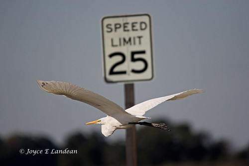 Speed Limit_IMG_6361mm-20L