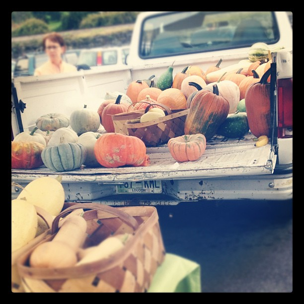 Trucks of pumpkins = my new favorite thing.