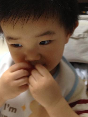 かわいこぶってるように見えるとらちゃん (2012/9/23)