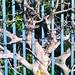 Tree Growth by Sascha Grabow