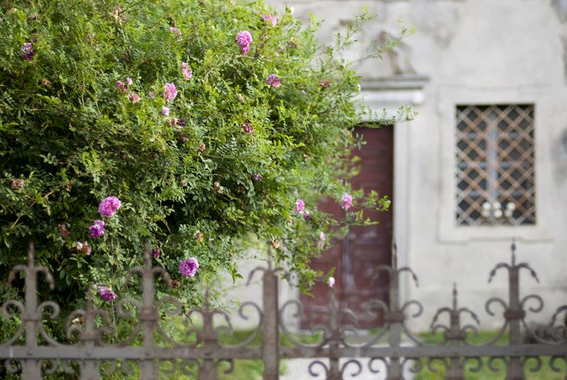 Strassoldo Roses