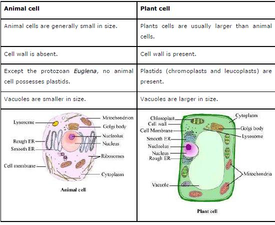 NCERT Solutions for Class 9th Science Chapter 5 The Fundamental Unit of Life