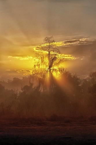 trees sunrise landscapes florida sunrisesunsetanythingsun sunrisesandsunsets treemendous sunrisessunsets cbbr 7003000mmf4556 circlebbarreserve exquisitesunsets planetearthsunrisesunsets