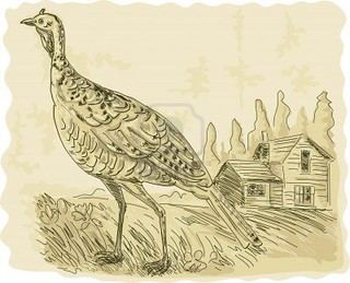5741220-illustration-of-a-wild-turkey-with-house-in-the-background