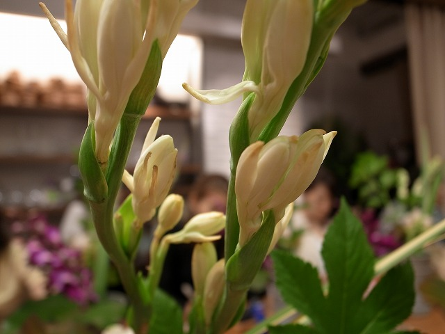 <p>b)チューベローズ!よい香りがします。<br /> この精油を使って南国の香りの香水を作ったことがありました。香りは知っていたけれど、お花を触るのは初めてです。</p>