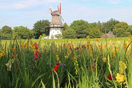 summer flower mill germany deutschland mühle sommer blumen bremen oberneuland fieldofflowers gladiolen blumenfeld nefesh supershot thegalaxy canoneos600d