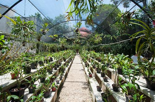 El invernadero de orquídeas de Xcaret