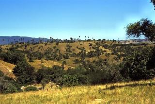 Rinca Hills
