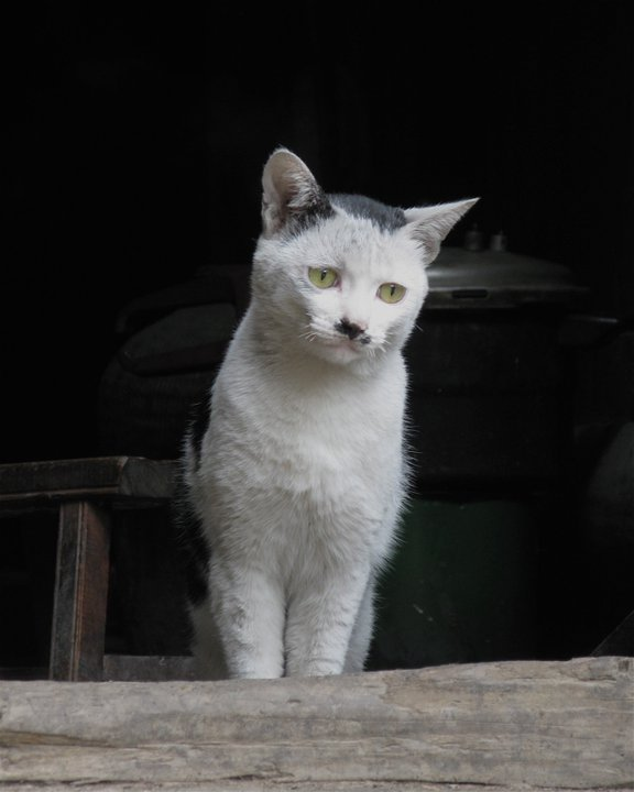 Kitler of Pingzhai by Adventurocity