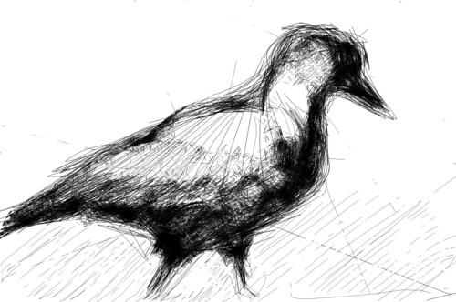 Bird in Richmond park