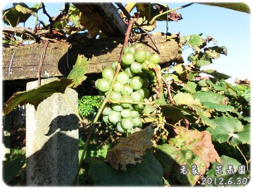 120630-山葡萄