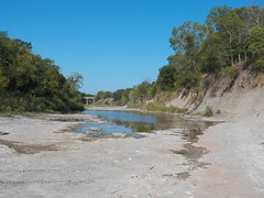 Ladonia Fossil Park, north Sulphur River