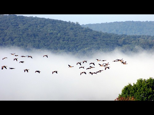 ny newyork mountains fog clouds flying geese team low group flight september hills patterson plump wedge 2012 gaggle 12563