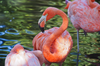 Flamingo 200mm