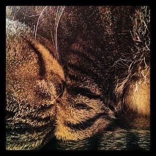 Macro Kitty Nap