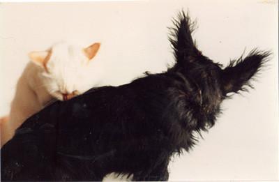 Soto & Angus 1