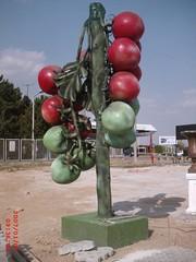 Domates Ağacı maketi