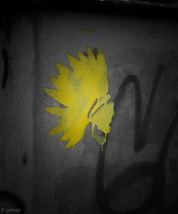 indien jaune