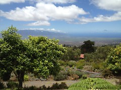 Views from lavender farm