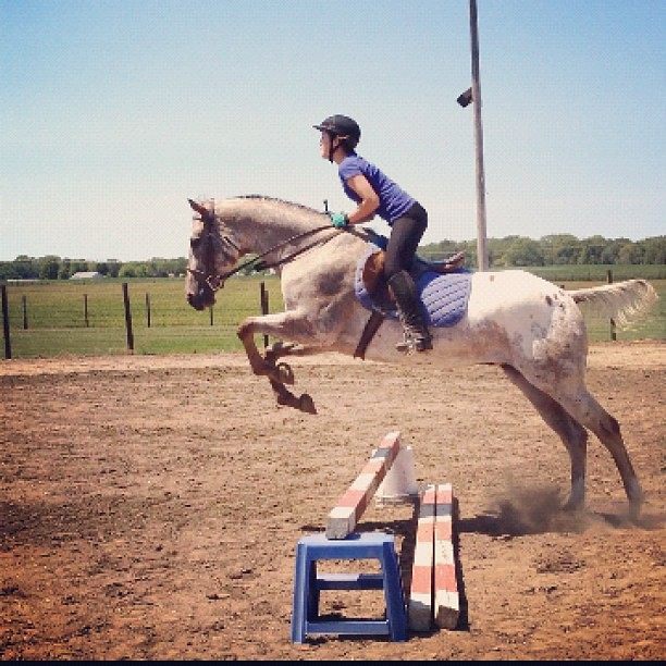 My Daughter Likes This One Better #horse #jump