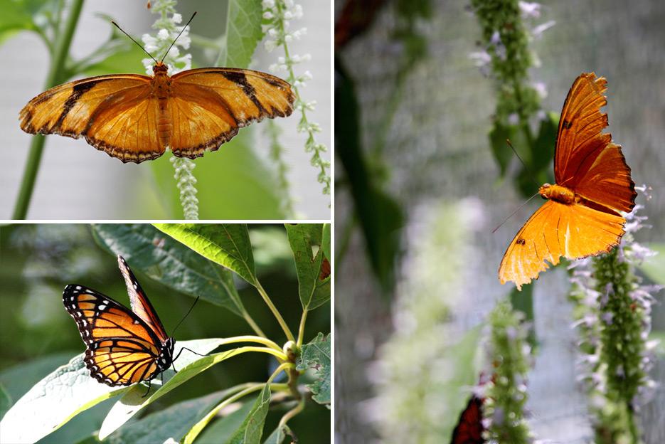 072612_08_butterfly03