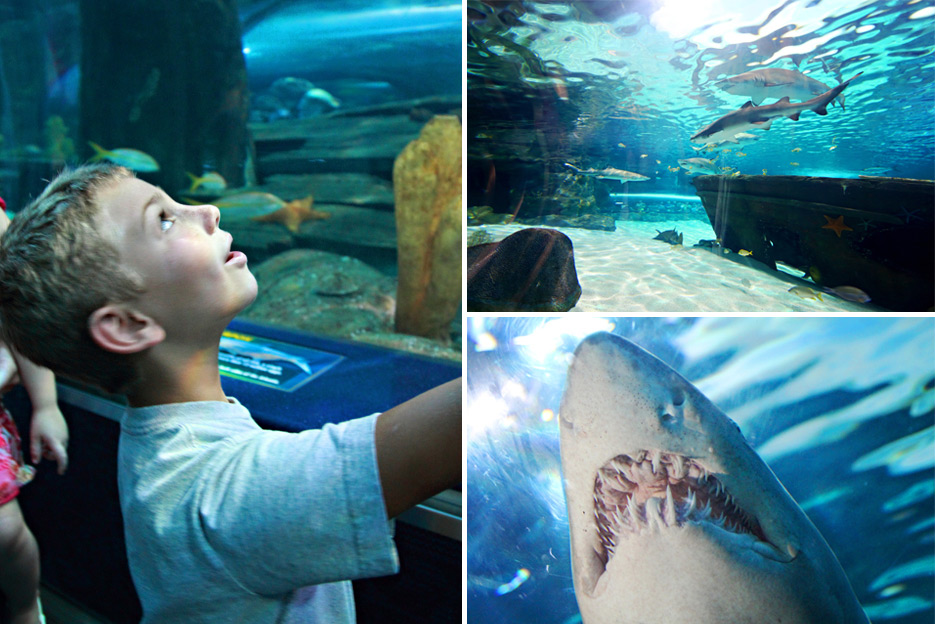 072612_10_aquarium06