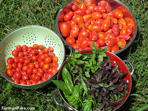 (23-2) Two kinds of tomatoes and two varieties of basil from the kitchen garden - FarmgirlFare.com