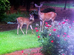 Mother and Child Reunion - Oh, Deer!